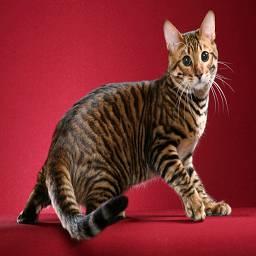 Кошка – животное довольно осторожное и что попало не ест. Такая беда, как отравление, может случиться только с неопытным котенком или с кошкой, которая утратила обоняние.