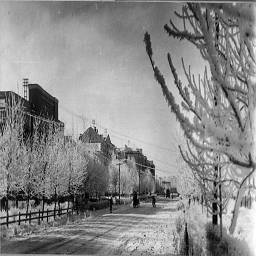 69. улица советская, иней в декабре.jpg