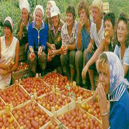 Сельское хозяйство Астраханского региона за 2000 год